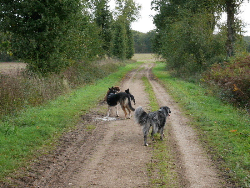 Lire la queue du chien P1040617