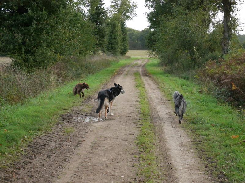 Lire la queue du chien P1040618