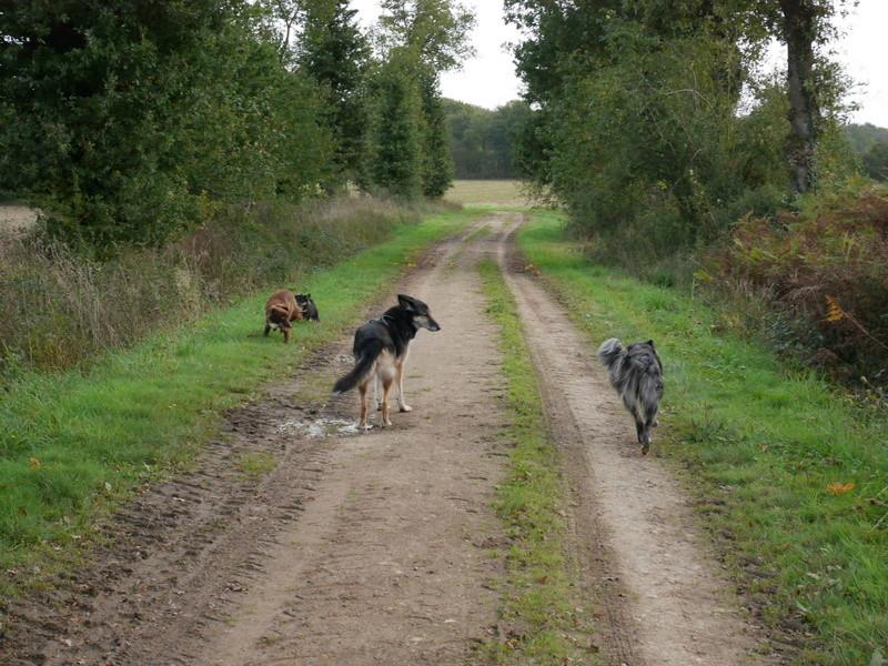 Lire la queue du chien P1040619