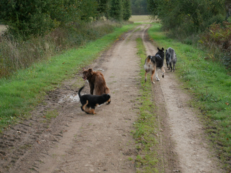 Lire la queue du chien P1040620
