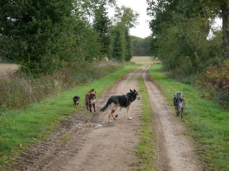 Lire la queue du chien P1040621