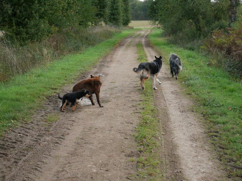 Lire la queue du chien P1040622