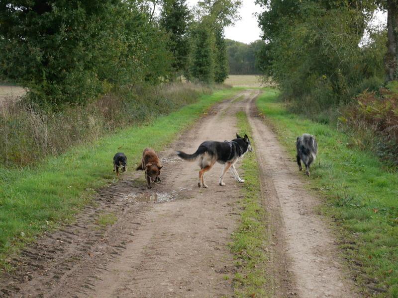 Lire la queue du chien P1040623