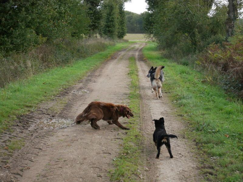 Lire la queue du chien P1040624