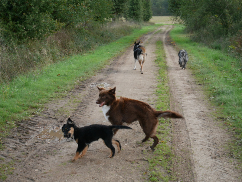 Lire la queue du chien P1040626