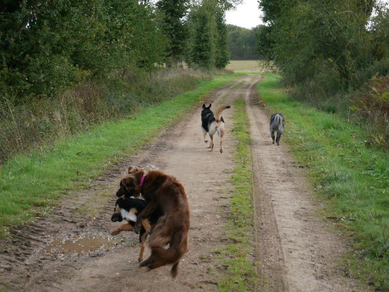 Lire la queue du chien P1040627