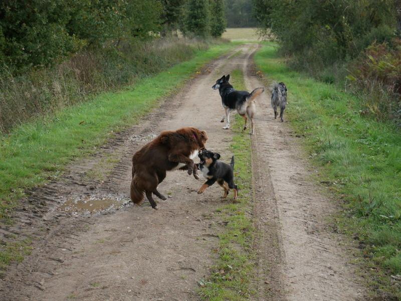 Lire la queue du chien P1040628