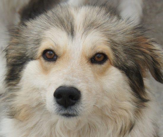 Lassie hat ein liebes Zuhause gefunden Lassie10