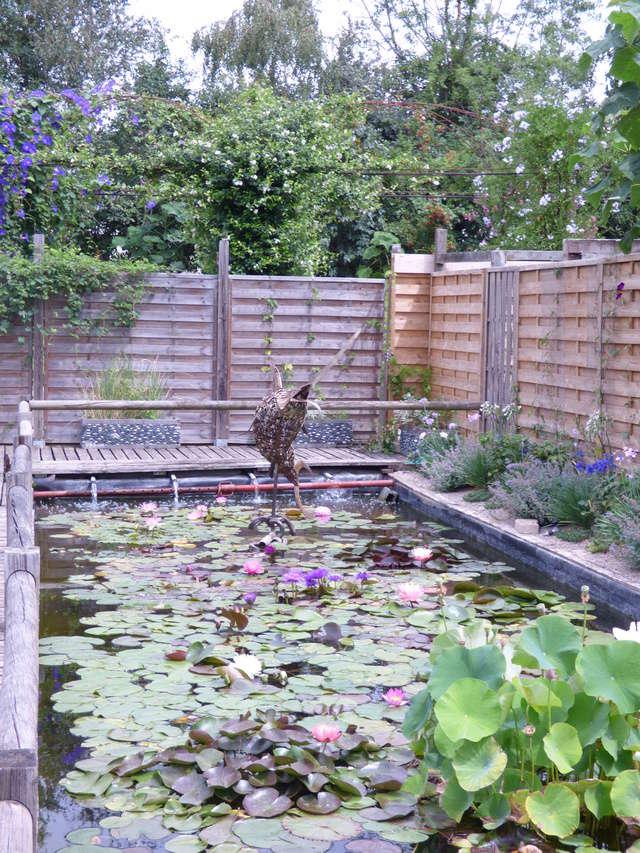 Aquatiques du Jardin des Martels P1080812