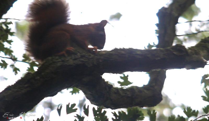 écureuil  Nouvea10