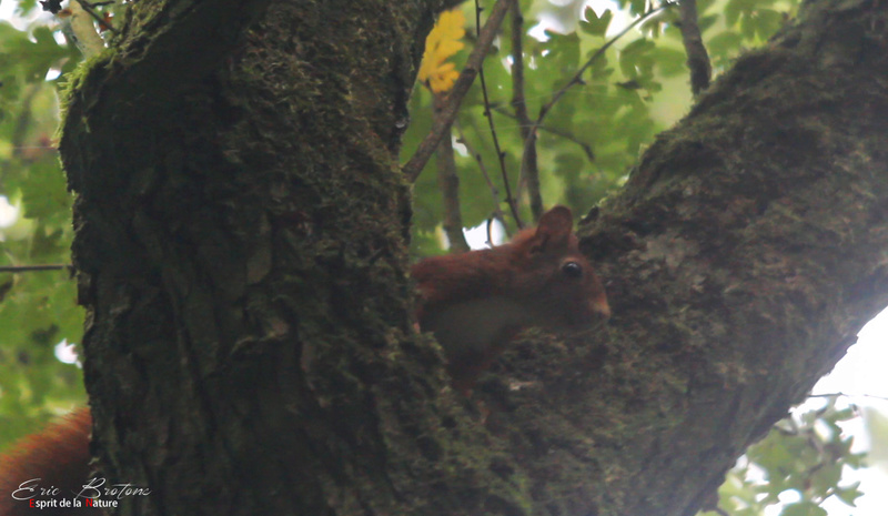 écureuil  Nouvea11