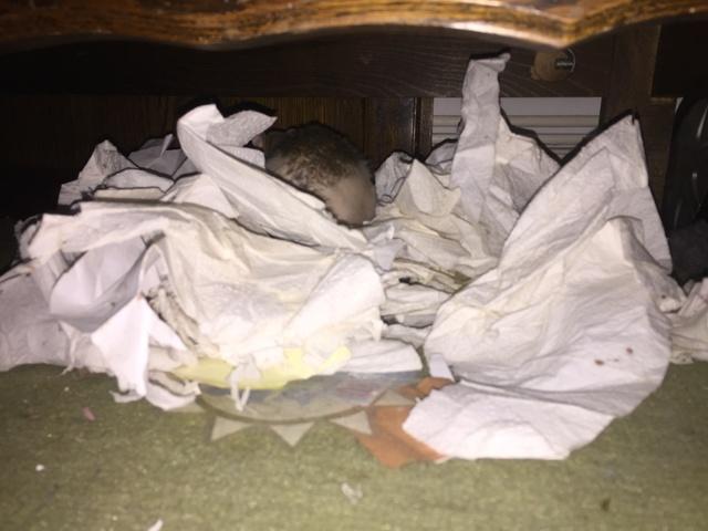 Et voici notre bébé Rat des champs : Ratatouille  - Page 11 Img_7913
