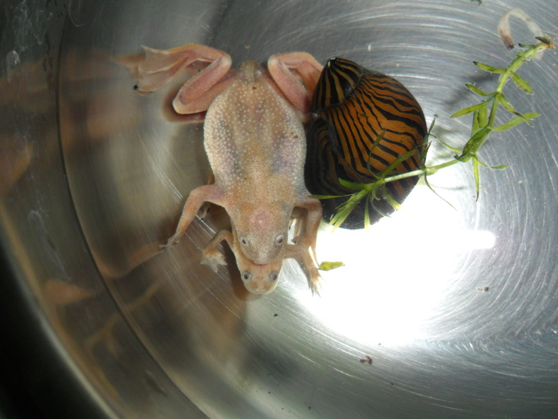 Mes grenouilles de petites tailles - Page 12 Sam_0725