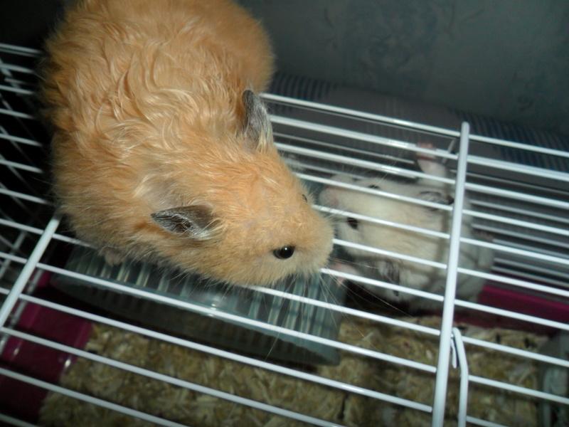Un hamster nommé Dicoon Sam_0922