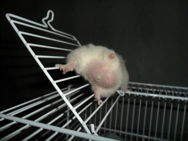 Un hamster nommé Dicoon Sam_0925