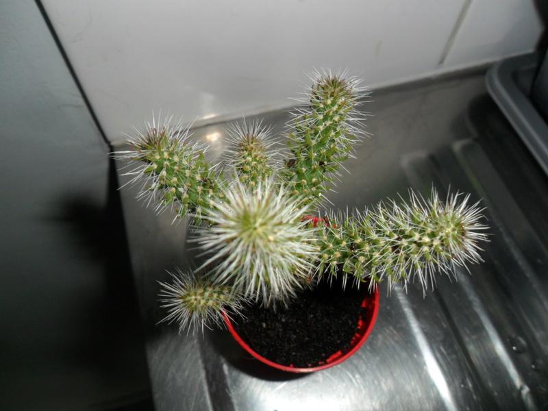 Mes bébés cactus - Page 3 Sam_1211