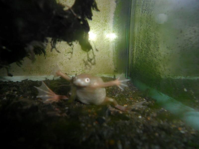 Mes grenouilles de petites tailles - Page 12 Sam_1231