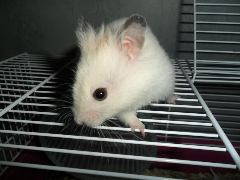 Un hamster nommé Dicoon Sam_1321