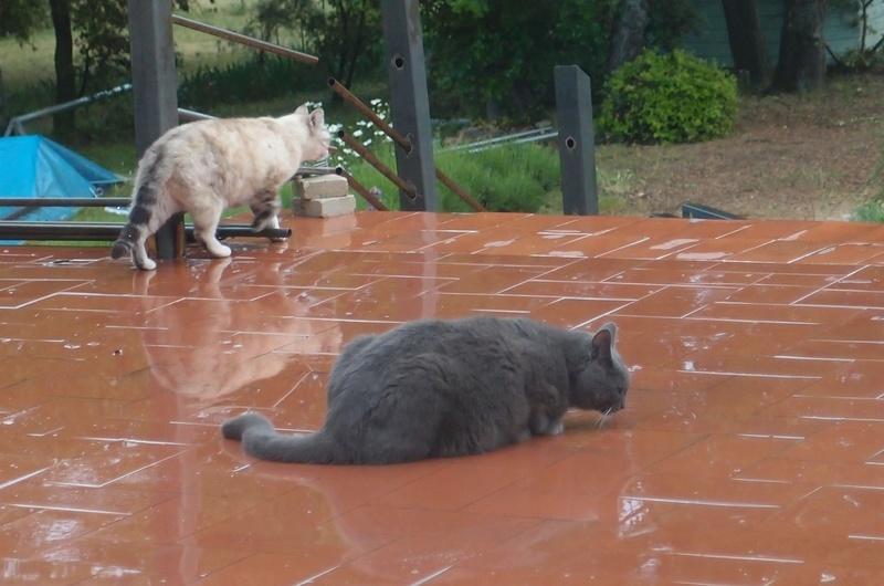 Au royaume des chats - Page 3 P5110710