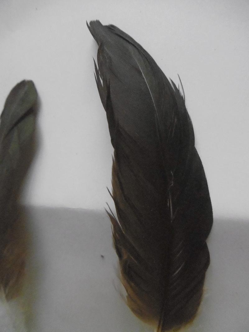 Pairi Daisa 2  P1000550
