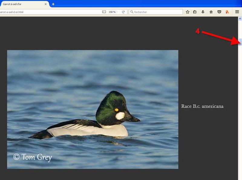 Excellent site pour les descriptions et comportements Oiseau12