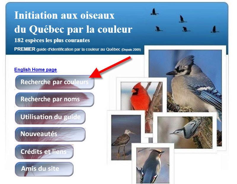 Excellent site pour les néophytes Oiseau14