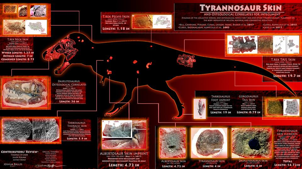 Debate: Did Tyrannosaurus Rex have Scales or Feathers? - Page 2 19149410