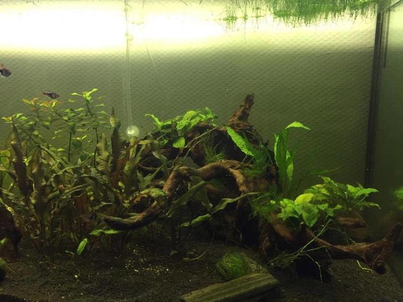 Bac Amazonien 360L Brut  Aquari10