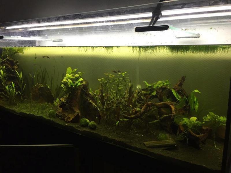 Bac Amazonien 360L Brut  Aquari13