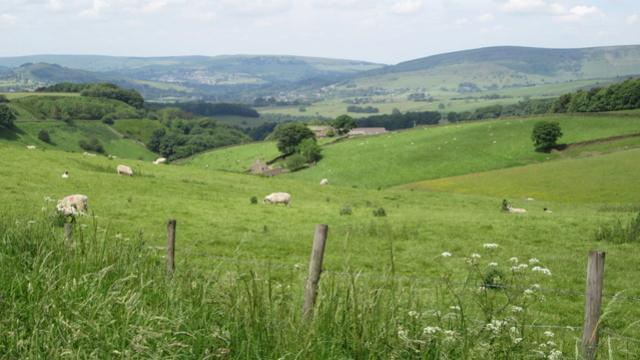 Ma Grande Bretagne : Somerset : suite et fin . Img_3326