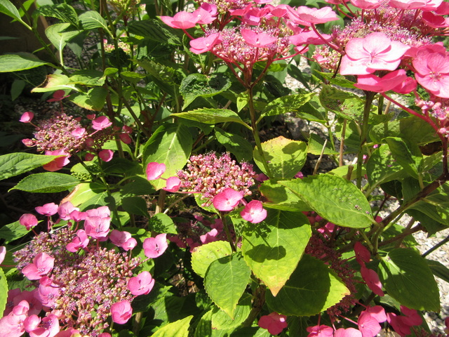 Welcome to my garden: hérissonne enceinte ? - Page 3 Img_3625