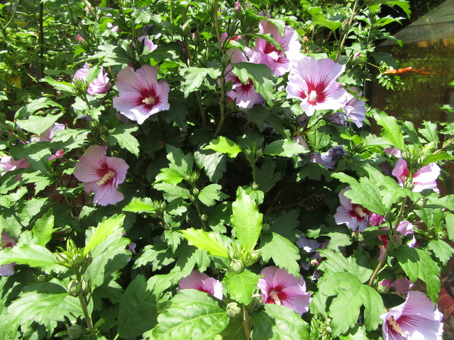 Welcome to my garden: hérissonne enceinte ? - Page 3 Img_3626
