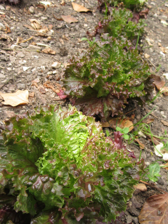 Welcome to my garden: hérissonne enceinte ? - Page 3 Img_3630
