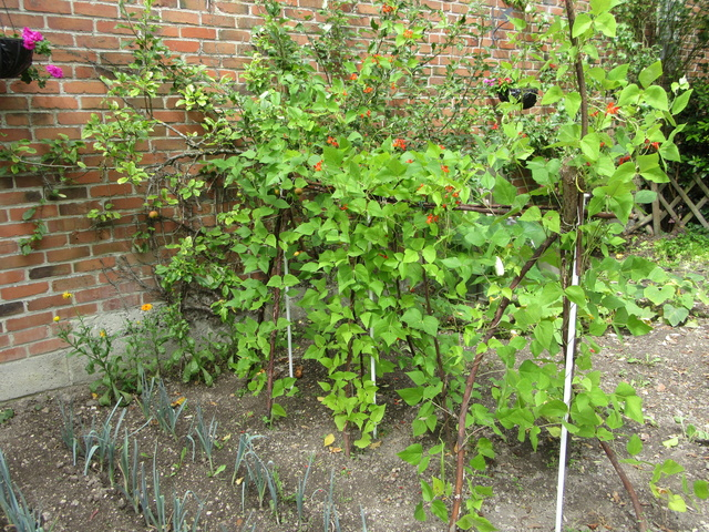 Welcome to my garden: hérissonne enceinte ? - Page 3 Img_3932