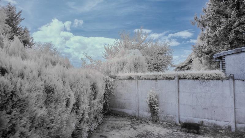 la nature en infrarouge Img_9211