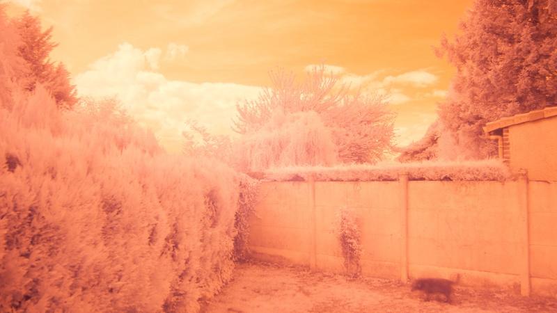 la nature en infrarouge Img_9212