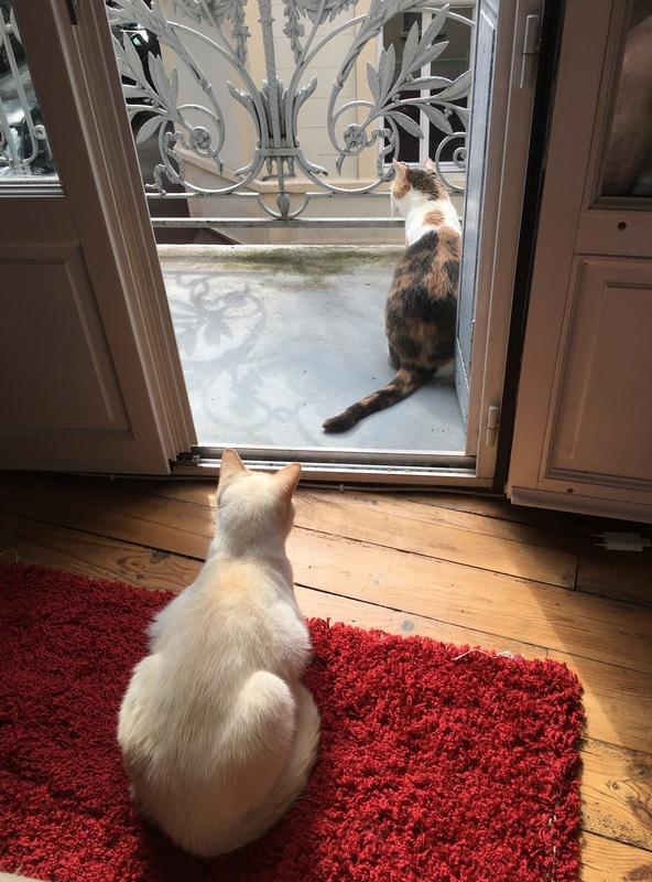 """lancome - Lancôme, jeune chat mâle crème """"red point"""", né en novembre 2015, EN DON LIBRE Img_3210"""