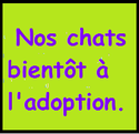 Forum adoption chats: Kerkaz'h Le Village des Chats - Portail Chats_10
