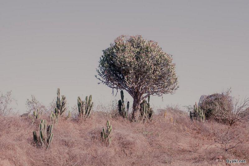 Landscape-pejzaži 15029111