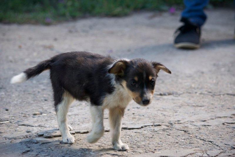 ARIZONA - chiot femelle croisée, née en mai 2017 - EN FA à PASCANI - décédée Arizon11