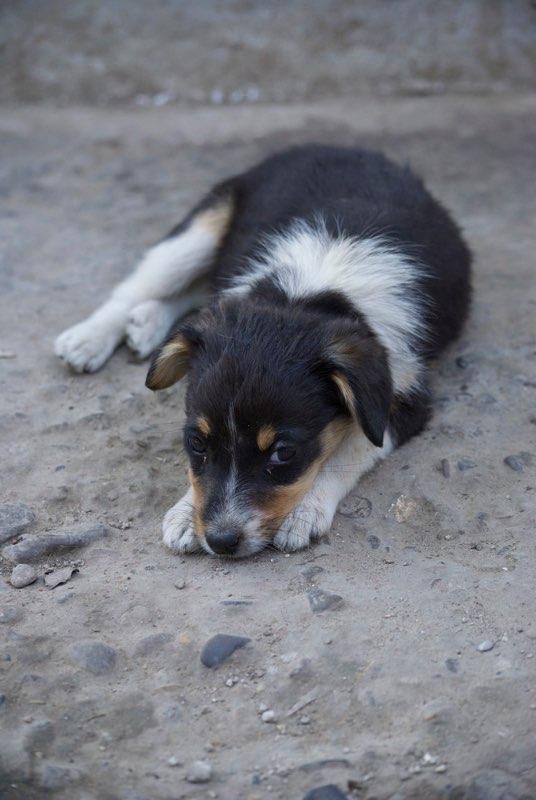 ARIZONA - chiot femelle croisée, née en mai 2017 - EN FA à PASCANI - décédée Arizon12