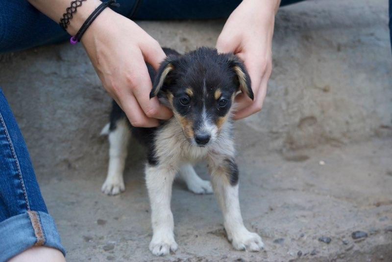 ARIZONA - chiot femelle croisée, née en mai 2017 - EN FA à PASCANI - décédée Arizon13