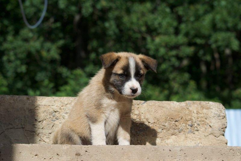 FLOKY, chiot mâle croisé - né environ mars 2017 - REMEMBER ME LAND - Adopté par Anna (depart57) Kador110