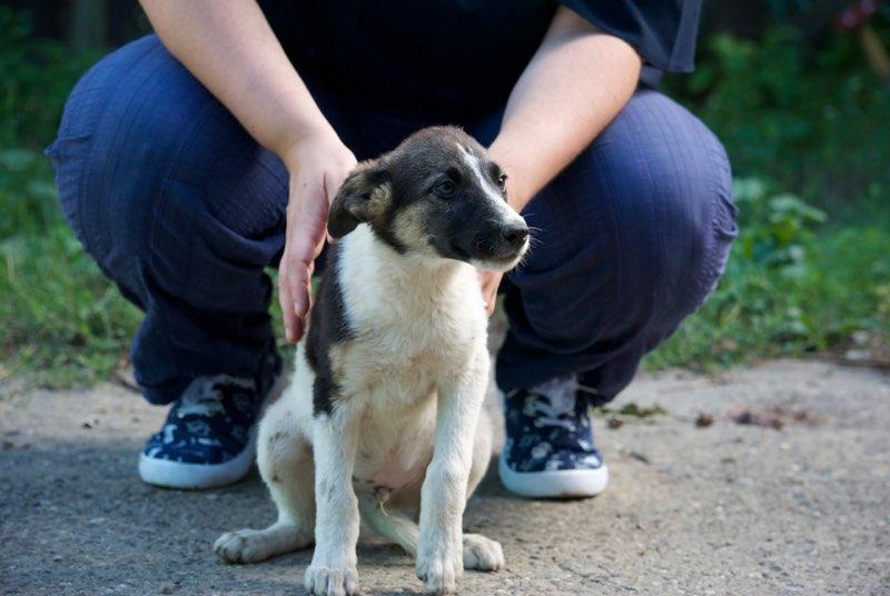 TEXAS, mâle croisé, de taille moyenne, né environ en avril 2017 - REMEMBER ME LAND - ADOPTE PAR CORINNE (Belgique) Texas210