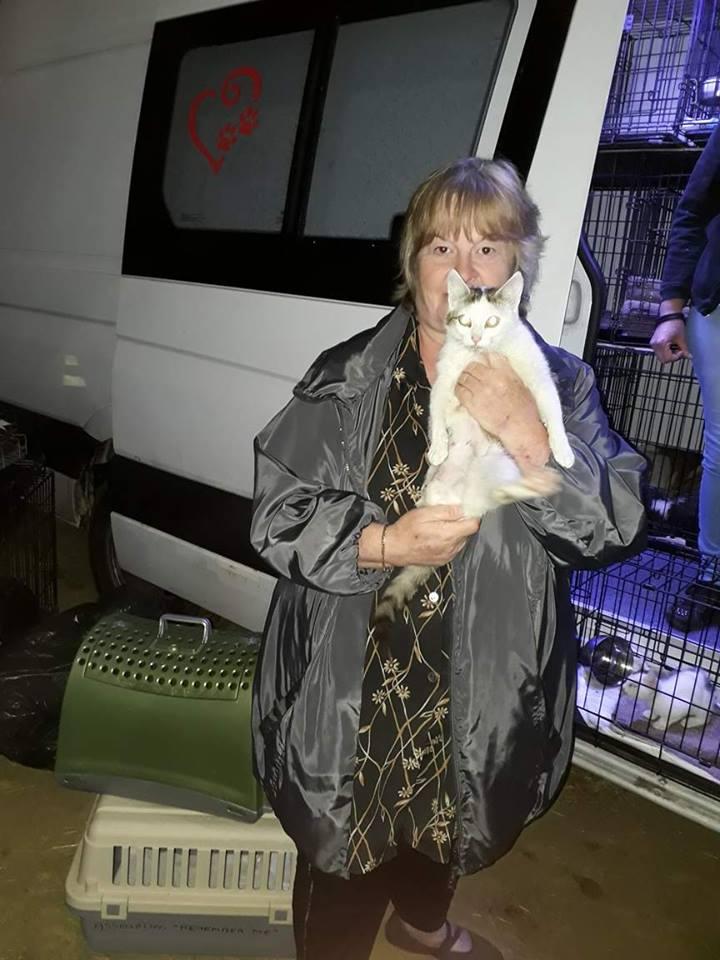 VODKA (ex KIARA) - chat femelle handicapée, née environ en 2015 - chez Lucian - Réservée FA par Abysse - ADOPTEE PAR VALERIE (92) 19756010