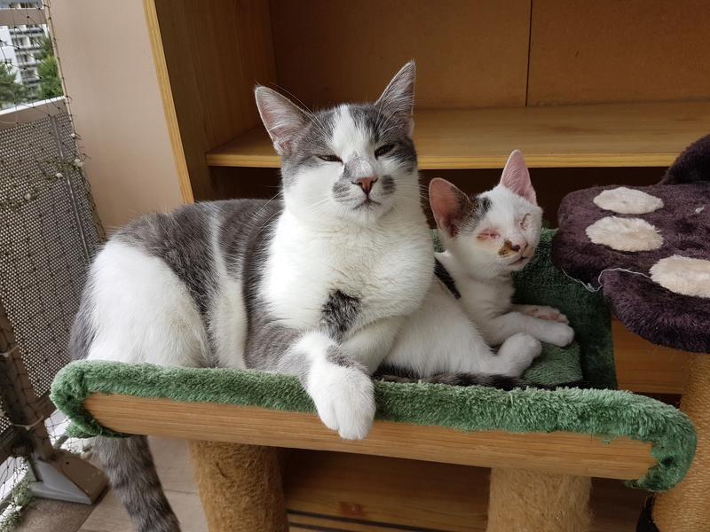 VOYOU, chaton mâle, né en Août/septembre 2016 (Pascani) - en FA chez Abysse (dpt92) - ADOPTE PAR VALERIE (92) 20170102