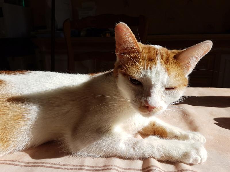 MITSY ( ex SATINE), chaton femelle née en mars 2016 - Pascani - adoptée par Abysse (dpt92) - PARTIE REJOINDRE LES ETOILES le 3 juillet 2017 .... - Page 2 20170614