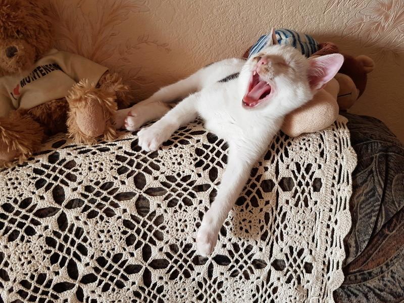 Mr SPOCK - chaton mâle, aveugle, né environ en mars 2017 - chez Lucian - Réservé FA par Abysse - Adopté par Valérie (92) 20170717