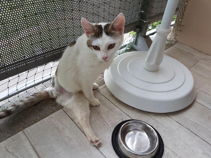 VODKA (ex KIARA) - chat femelle handicapée, née environ en 2015 - chez Lucian - Réservée FA par Abysse - ADOPTEE PAR VALERIE (92) 20170727