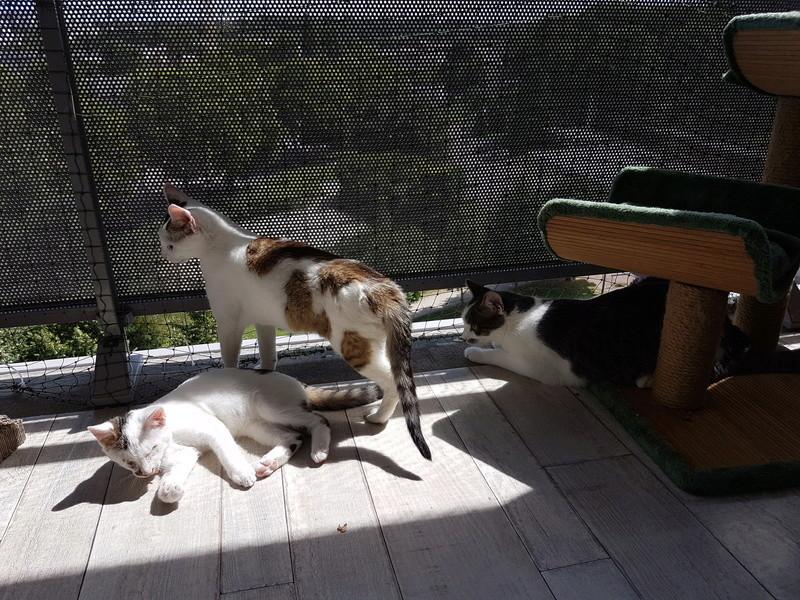 VODKA (ex KIARA) - chat femelle handicapée, née environ en 2015 - chez Lucian - Réservée FA par Abysse - ADOPTEE PAR VALERIE (92) 20170788